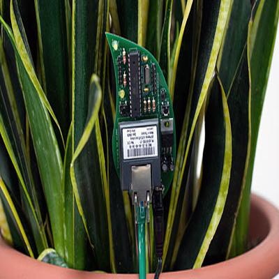 botanicalls-diy-plant-twitter-kit