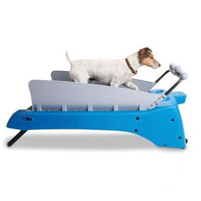 the-canine-treadmill