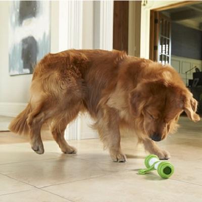 Interactive Dog Bone 1