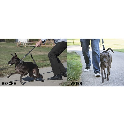 Dog Ultrasonic Walking Trainer 1