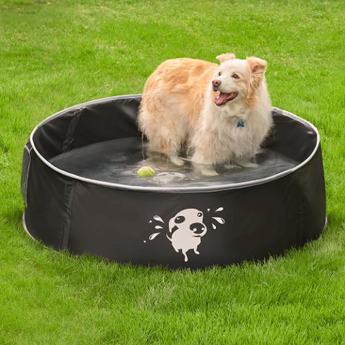 Pop Up Canine Splash Pool