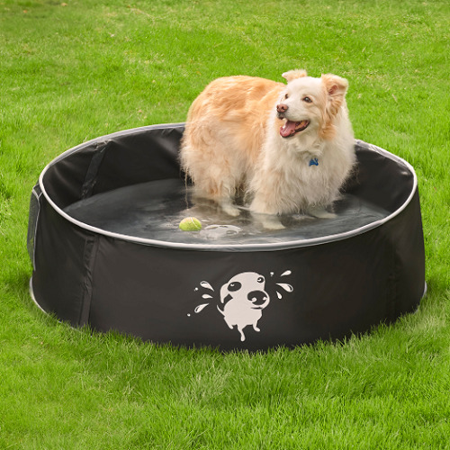 Pop-Up-Canine-Splash-Pool